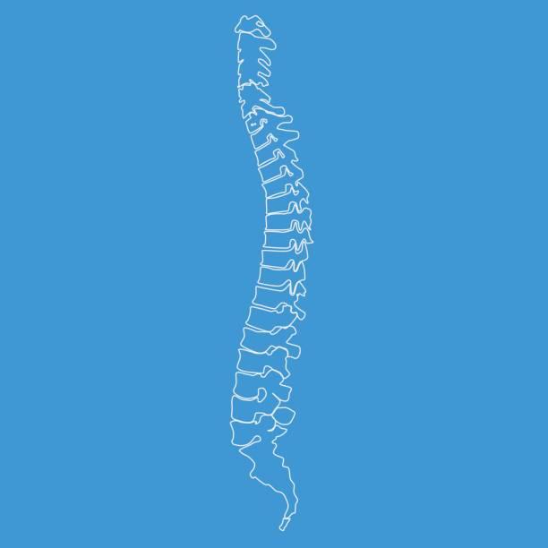 illustrations, cliparts, dessins animés et icônes de vector illustration épine blanche diagnostic symbole avec style de ligne - chiropracteur