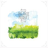 Organic farms. Watercolor illustration pshenicheono field with the sky. Vector illustration of nature.