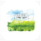 Organic farms. Watercolor illustration pshenicheono field with the sky. Vector illustration of nature.