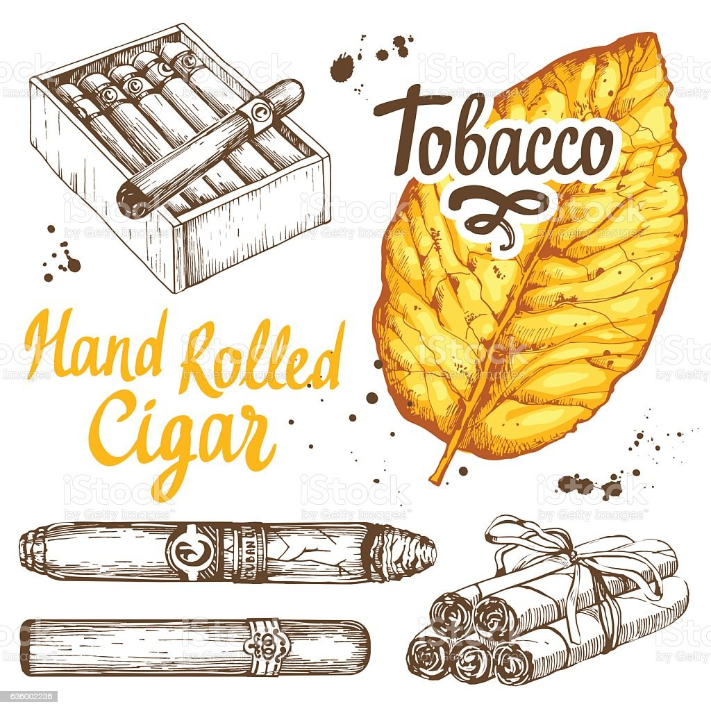 Vector illustration with classical smokeking set. Bunch of tobacco and vector art illustration
