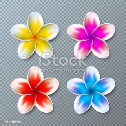 Vector Illustration with Colorful Plumeria Flower Collection Isolated on Transparent Background. Vector Holiday Design Elemets with Hawaiian Tropical Flowers Set for Banner, Flyer, Invitation, Brochure, Party Poster or Greeting Card