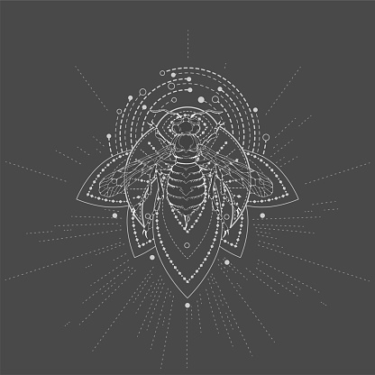 Vector illustration with hand drawn Wasp and Sacred geometric symbol.