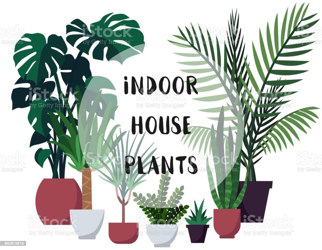 屋内の観葉植物とベクトル イラストポスターカバーテキスト用のスペース