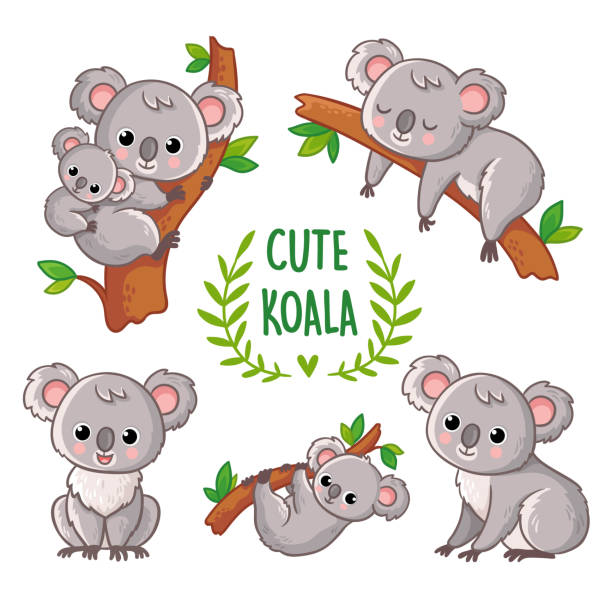 vector illustration with koala in various poses. - koala stock illustrations