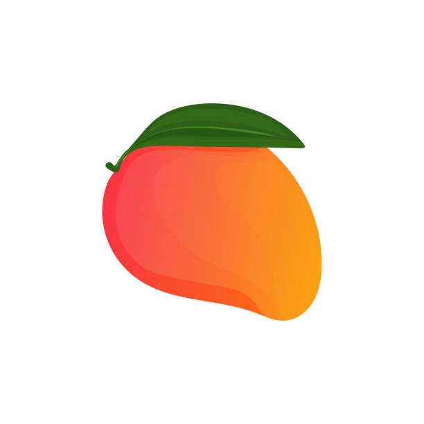 Vector illustration with one fruity mango in cartoon style. Bright juicy mango icon isolated on a white background. For label and logo simple design. Vector illustration with one fruity mango in cartoon style. Bright juicy mango icon isolated on a white background. For label and logo simple design. mango stock illustrations