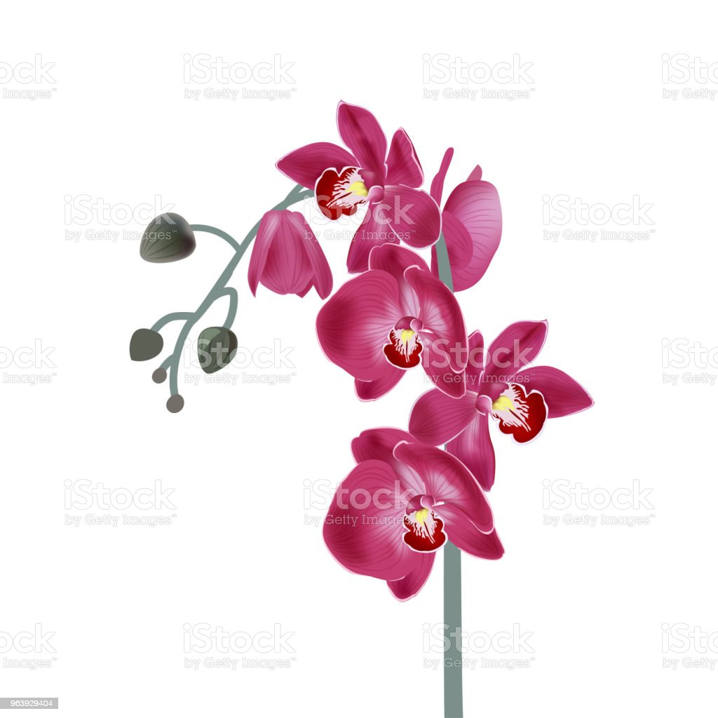 Vector illustration with pink orchids. Digital draw tropical plant, realistic vector botanical illustration for design - Royalty-free Animal Wildlife stock vector