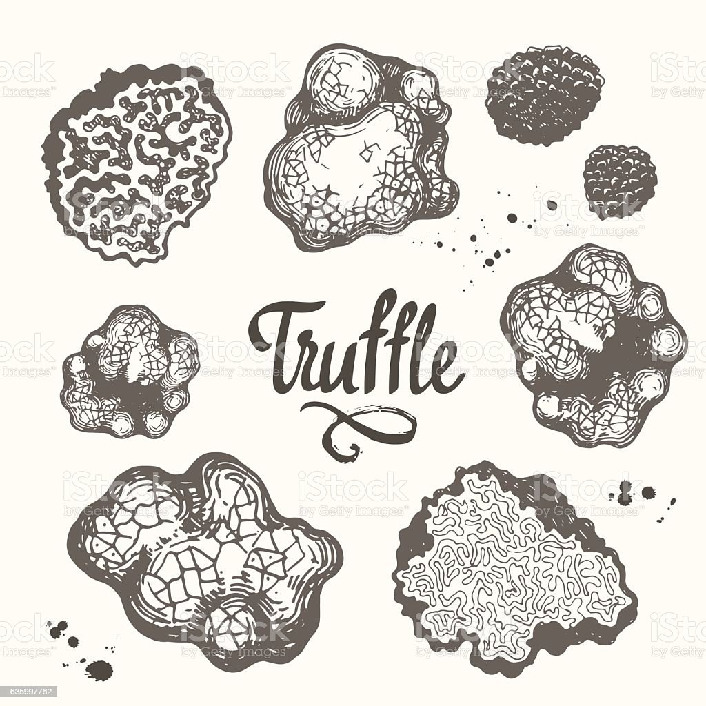 Vector illustration with set of mushrooms in sketch style. Hand vector art illustration