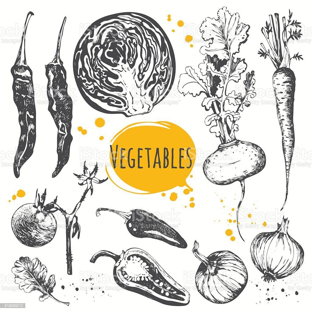 Vector illustration with sketch of mediterranean vegetable. vector art illustration