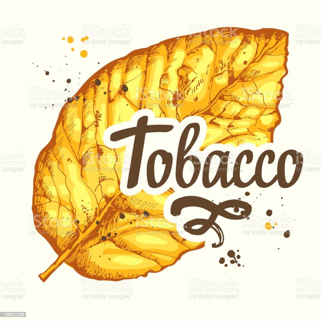 Ilustración de Vector Ilustración Con Hoja De Tabaco Amarillo Secado ...