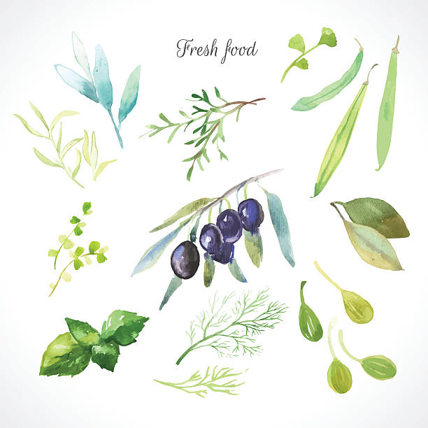 Vector Illustration with watercolor food. Watercolor illustration of a painting technique. Fresh organic food. Set of different herbs. Olives, rosemary, sage, tarragon, capers, dill, beans and bay leaf. dill stock illustrations