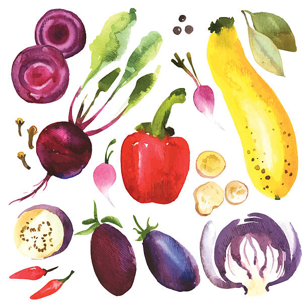 Vector Illustration with watercolor food. Watercolor vegetables and herbs. Provencal style. Recent watercolor paintings of organic food. Radishes, zucchini, pepper, bay leaves, ginger, green onion, asparagus, rosemary, cloves, pumpkin. squash vegetable stock illustrations