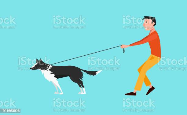 Vector illustration young man walk the dog the dog pulls on a leash vector id921663926?b=1&k=6&m=921663926&s=612x612&h=sfwndfpd5rneukolo803yg zk lo20ih fsgnzzfdqo=