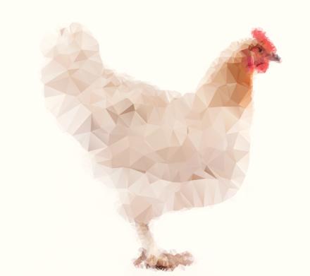Vector illustrationof farm hen