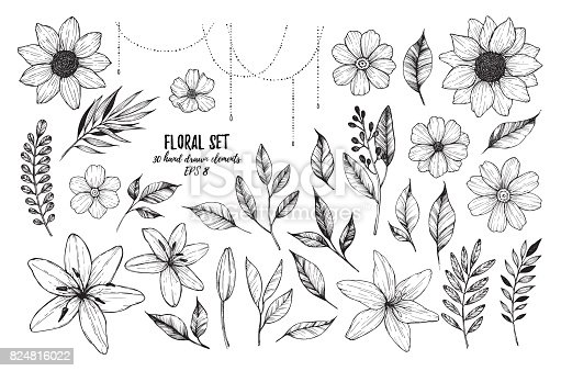 istock Vector illustrations - Floral set (flowers, leaves and branches). 30 hand drawn design elements in sketch style.  Perfect for invitations, greeting cards, tattoo, prints etc 824816022