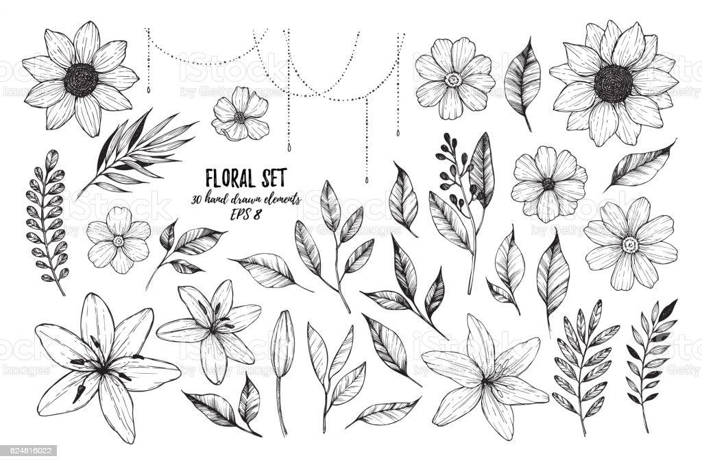 Ilustraciones de vectores - sistema Floral (flores, hojas y ramas). 30 diseño dibujado estilo del bosquejo de los elementos en la mano.  Ideal para invitaciones, tarjetas de felicitación, tatuaje, impresiones etcetera - ilustración de arte vectorial