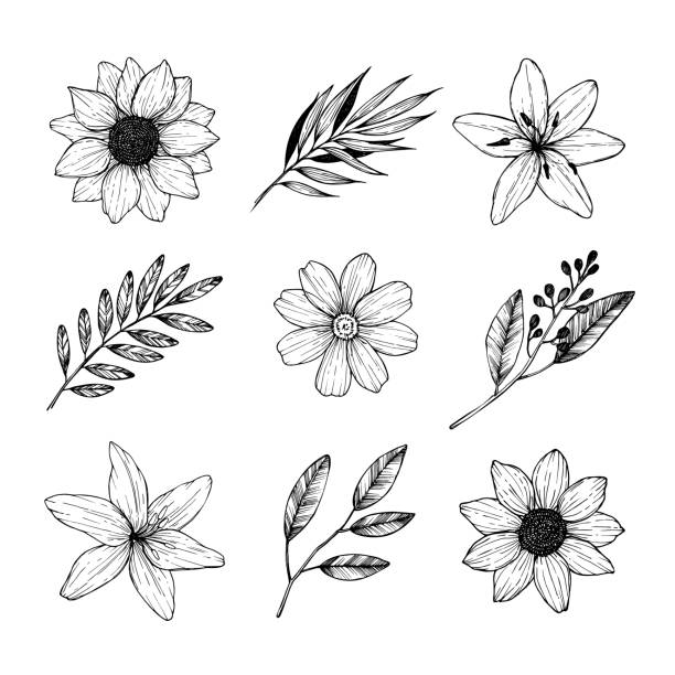 Vector illustrations - Floral set (flowers, leaves and branches). Hand drawn design elements in sketch style. Perfect for invitations, greeting cards, tattoo, prints etc Vector illustrations - Floral set (flowers, leaves and branches). Hand drawn design elements in sketch style. Perfect for invitations, greeting cards, tattoo, prints etc flowers tattoos stock illustrations