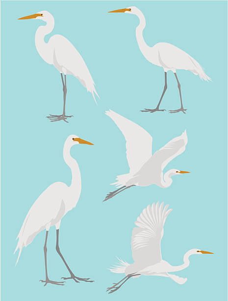 Vector illustrations of a heron in various poses A group of five herons . heron stock illustrations