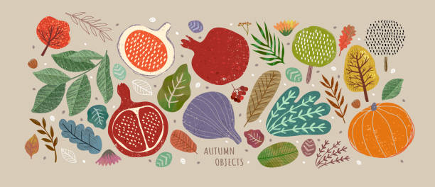 Vector illustrations of autumn objects: fruits and vegetables, harvest, trees, leaves, plants, pumpkin, pomegranates, figs and nuts. Cute freehand drawings to create a poster or card. Vector illustrations of autumn objects: fruits and vegetables, harvest, trees, leaves, plants, pumpkin, pomegranates, figs and nuts. Cute freehand drawings to create a poster or card. fig stock illustrations
