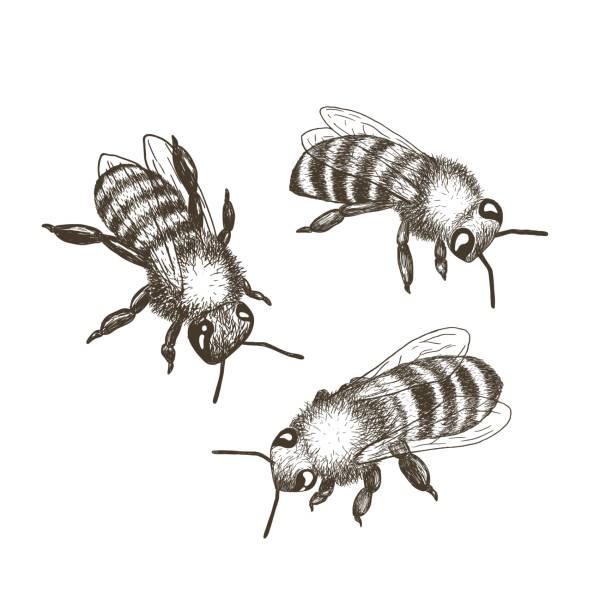 vektor-illustrationen von bienen isoliert auf weißem hintergrund. - landschaftstattoo stock-grafiken, -clipart, -cartoons und -symbole