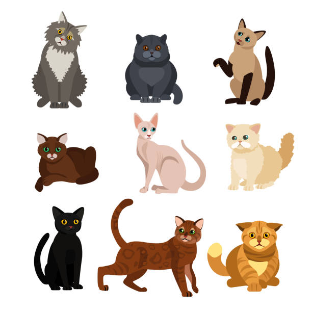 vector illustrations of cat different breeds set, cute pet animals, lovely kitten on white background in flat style design. - cat stock illustrations