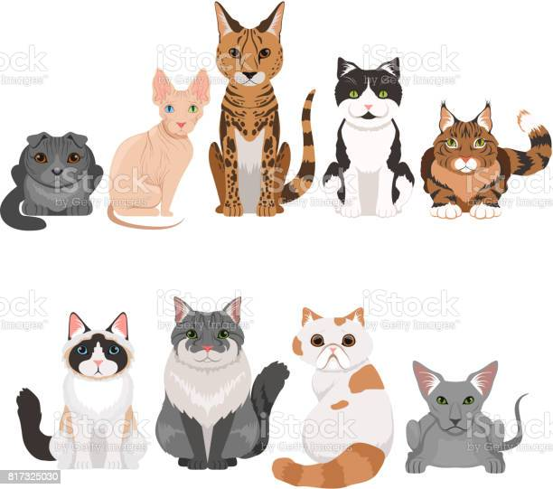 Vector illustrations set of many different kittens cats characters in vector id817325030?b=1&k=6&m=817325030&s=612x612&h=jlg31yh9scn8wc83qkb t3ljvtei8qn4pknvcnuduec=