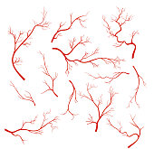 Vector illustrations set of veins and vessel, red capillaries, blood arteries isolated on white background.