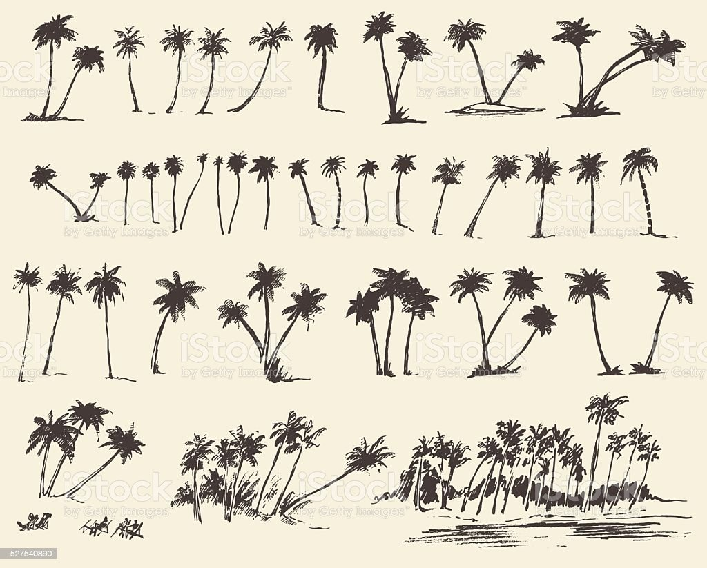 Vector Illustrations Silhouette Palm Trees Sketch vector art illustration