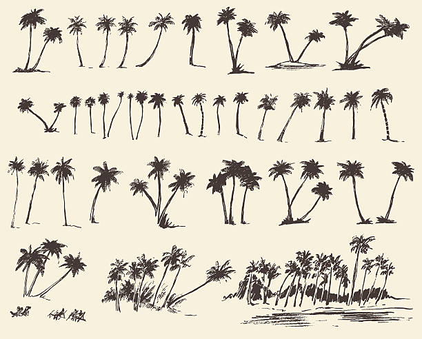 Vector Illustrations Silhouette Palm Trees Sketch vector art illustration