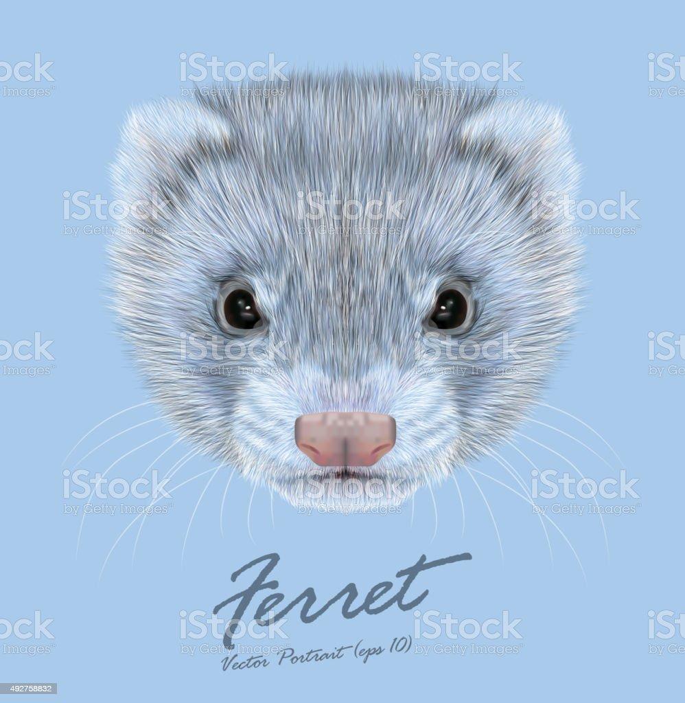 Vecteur d'illustration portrait de Ferret - Illustration vectorielle