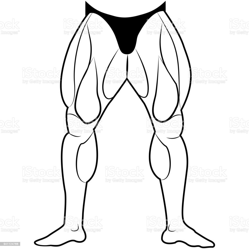 Vector Image Lower Body Man The Muscles Of The Legs White Background ...