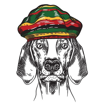Vector image of a dog in a Rastafarian hat. T-shirt design