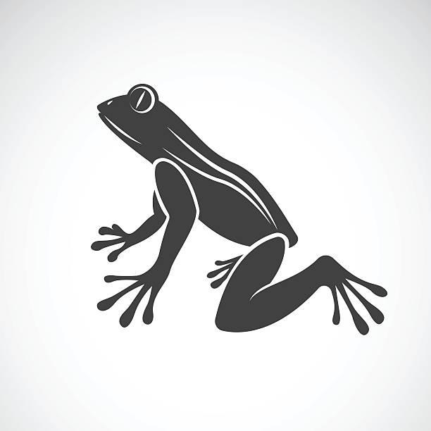 Vector image of a frog design vector art illustration