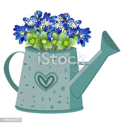 istock vector image of a garden watering can with a bouquet of liverworm flowers 1330234512