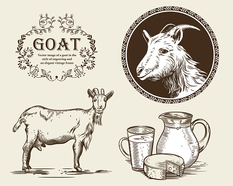 Vector image of a goat, a jug of goat milk and goat cheese. A set of agricultural illustrations in the style of engraving