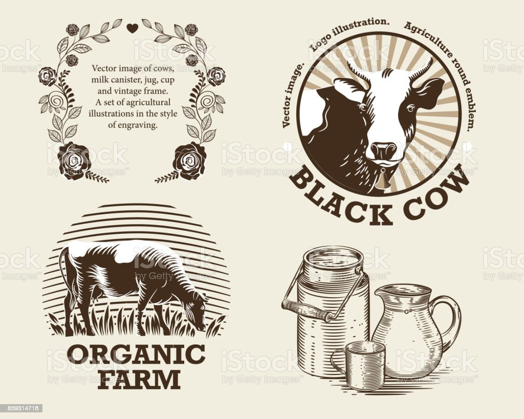 Vector image of cows, milk canister, jug, cup and vintage frame. A set of agricultural illustrations in the style of engraving vector art illustration