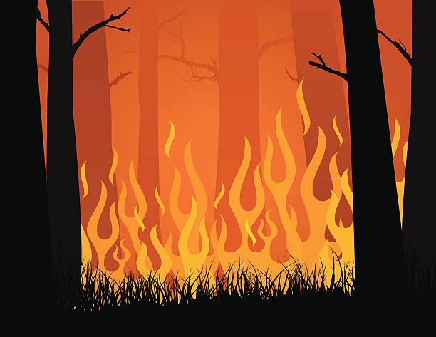 bildbanksillustrationer, clip art samt tecknat material och ikoner med vector image of forest fire blazing in yellows and oranges - skog brand