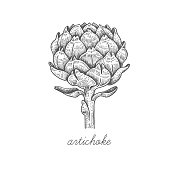 Artichoke. Vector plant isolated on white background. The concept of graphic image of medical plants/herbs/flowers/fruits/roots. Designed to create package of health and beauty natural products.
