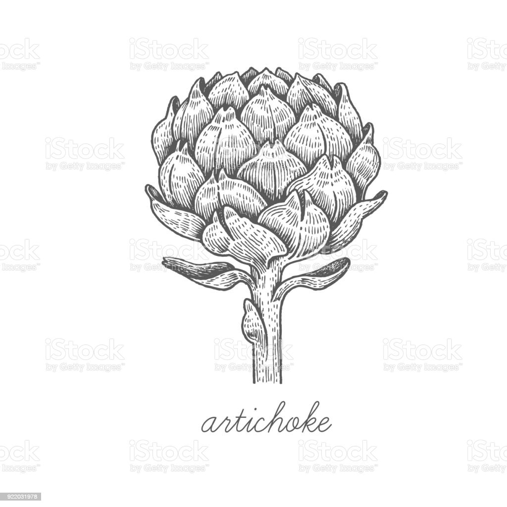 Vector image of medical plants. vector art illustration