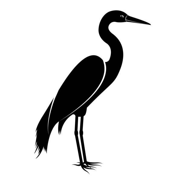 vector image of the silhouette of the birds of the heron - crane bird stock illustrations