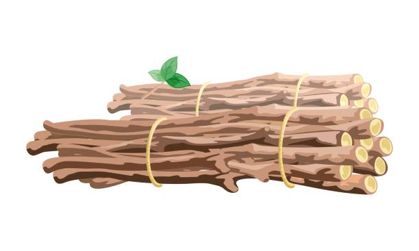 Vector image shows brown branches stack bound with cord Vector image shows brown branches with green leaves stack bound with yellow cord cartoon style bundle stock illustrations