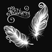 Vector images of decorative feathers
