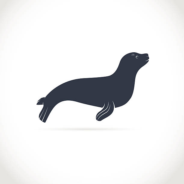 Best Sea Lion Illustrations, Royalty-Free Vector Graphics ...