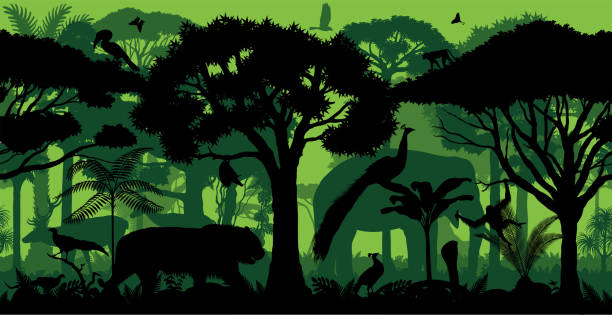 vektor indische horizontale nahtlose tropischen regenwald dschungel wald hintergrund mit tieren - megabat stock-grafiken, -clipart, -cartoons und -symbole