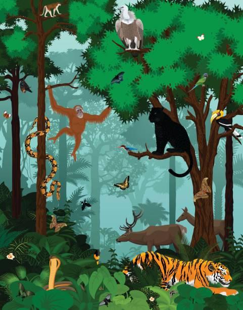 indischen dschungel regenwald vektorgrafik mit tieren - megabat stock-grafiken, -clipart, -cartoons und -symbole