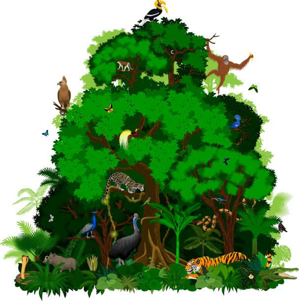 vektor-indonesischen regenwald dschungel tropischen wald mit tieren - megabat stock-grafiken, -clipart, -cartoons und -symbole
