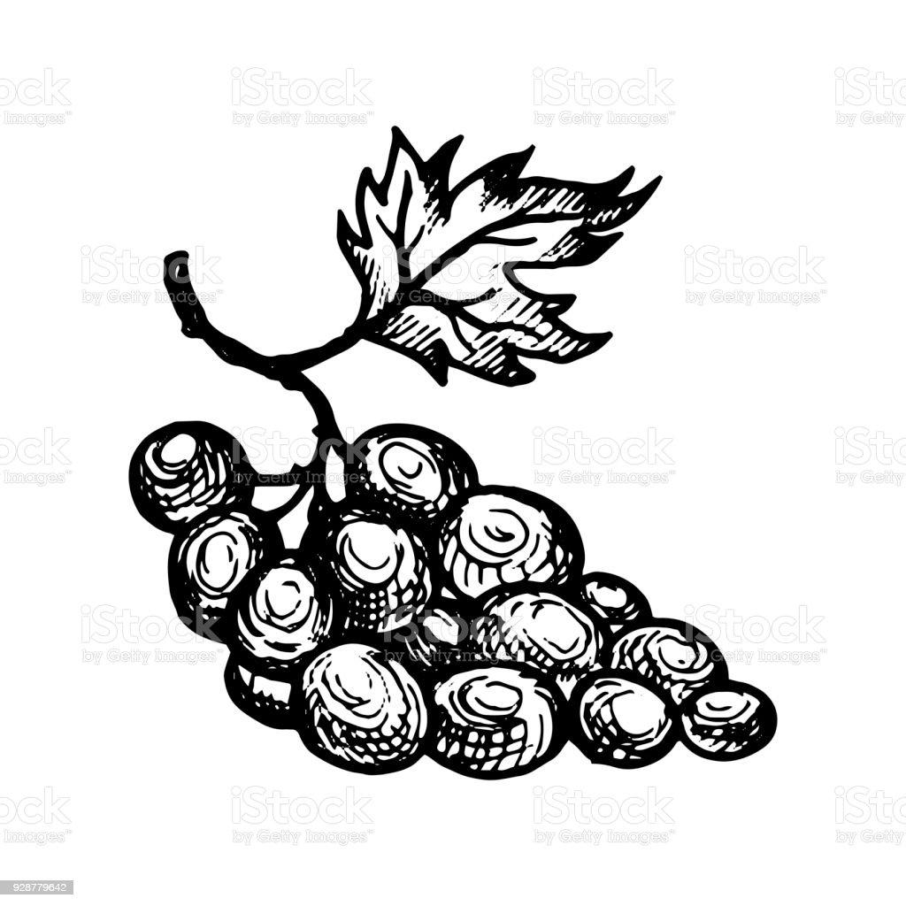 ilustração de uva desenho do vetor tinta e mais banco de imagens de