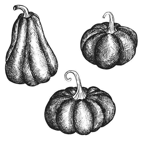 vector ink drawing pumpkins vector art illustration