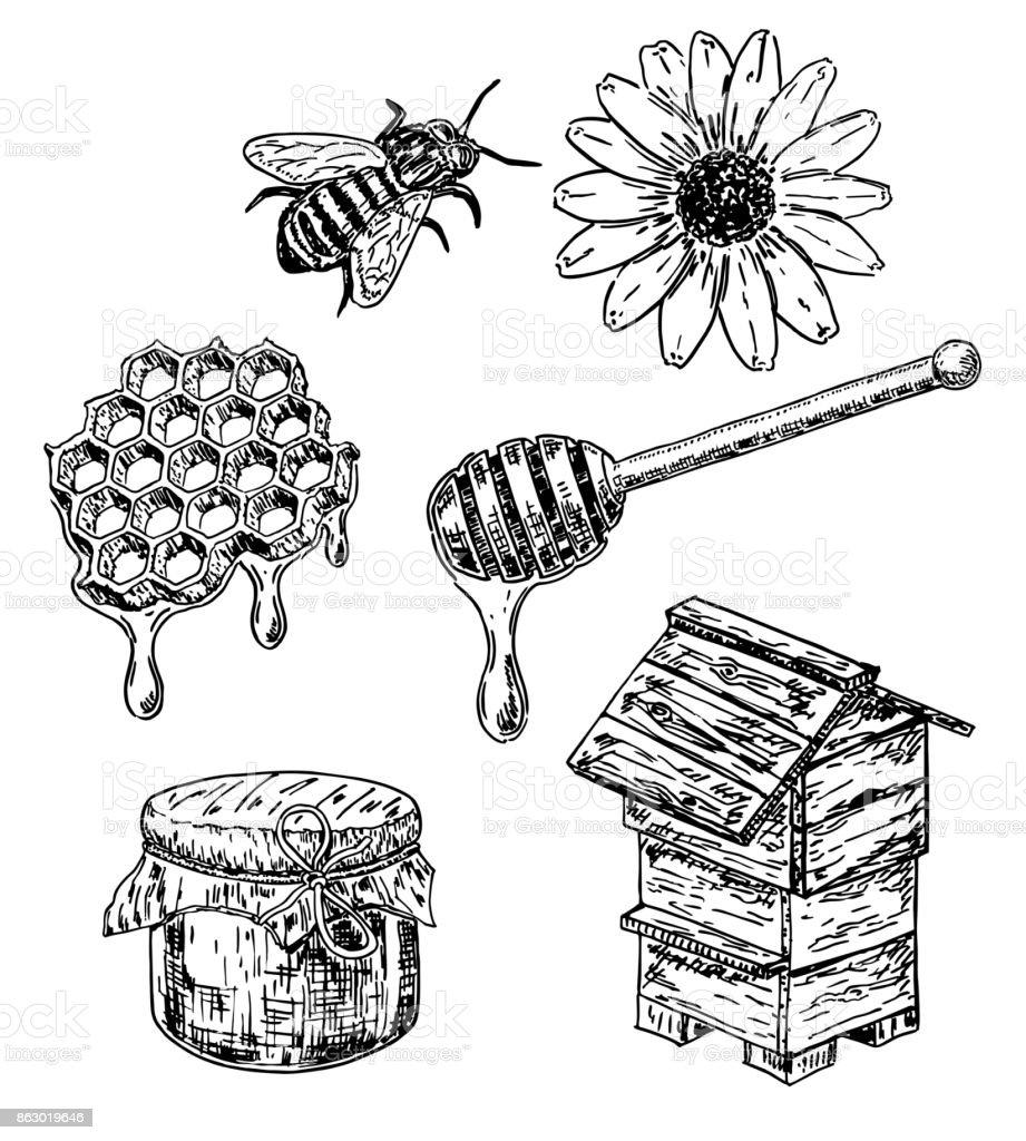 Vector ink hand drawn sketch style honey set vector art illustration