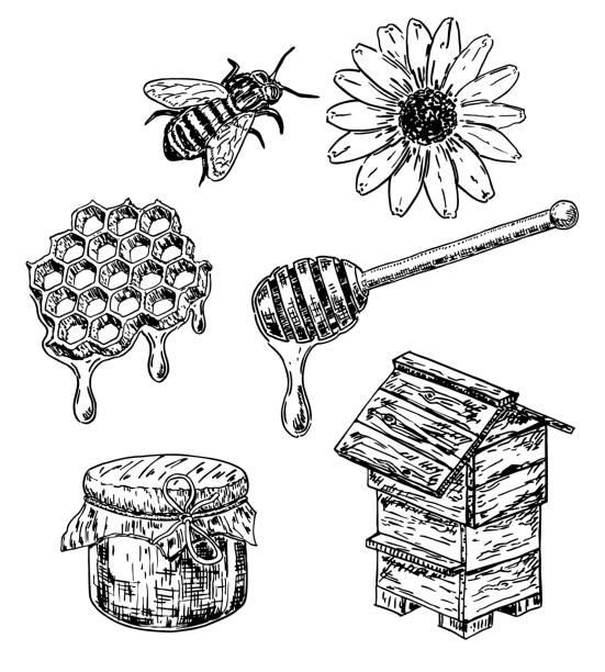 illustrazioni stock, clip art, cartoni animati e icone di tendenza di vector ink hand drawn sketch style honey set - favo