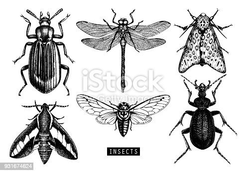 Vector collection of hand drawn insects. Vintage butterfily, cicada, beetle, bug, dragonfly illustrations. Tattoo drawing set.